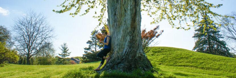meditation music - thinking tree
